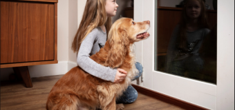 Is Your Dog Shaking due to Fireworks? Safety Tips for 4th of July