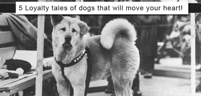 5 Loyalty Tales Of Dogs That Will Move Your Heart