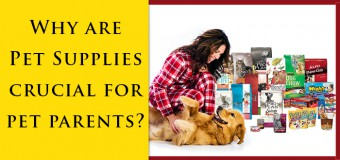 Why Are Pet Supplies Crucial For Pet Parents?