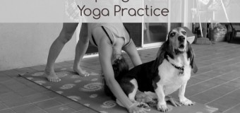 Pets Distracting Their Owner's Yoga Practice- Distraction At Its Cutest
